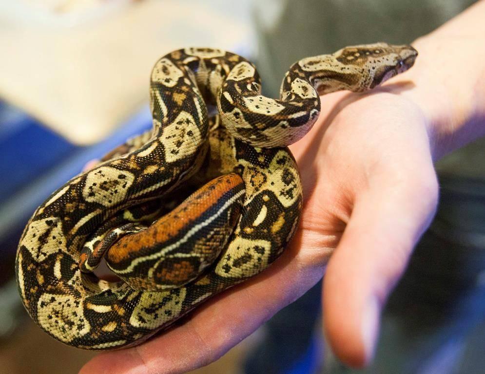 К чему снится укус змеи, если змея укусила во сне вас или кого-то другого? основные толкования, к чему снится укус змеи