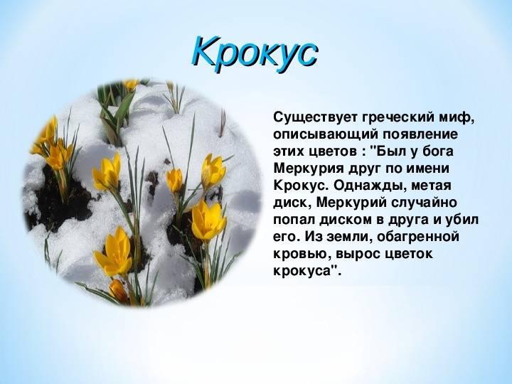 Весенние растения связанные с легендами. старинные поверья о цветах — символах весны