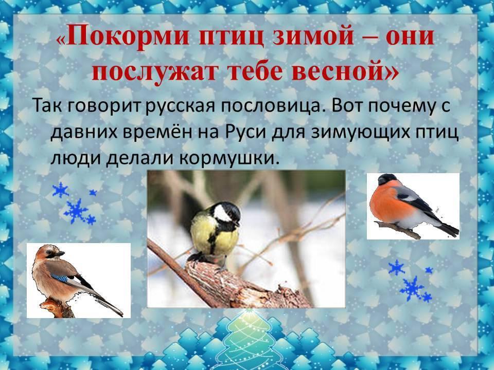 Приметы, связанные с птицами: правдивые толкования