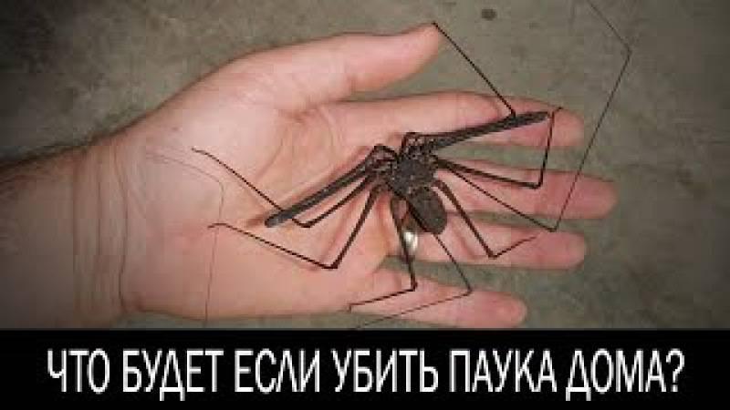 Толкование приметы, почему нельзя убивать пауков в доме