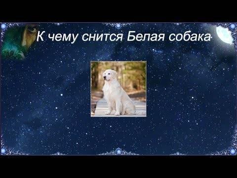 К чему снится собака по соннику? видеть во сне собаку  - толкование снов.