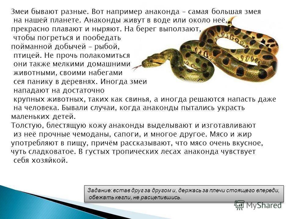 Сонник укус змеи без крови. к чему снится укус змеи без крови видеть во сне - сонник дома солнца
