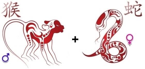 Тигр и змея: совместимость мужчины и женщины в любви, браке, дружбе и карьере