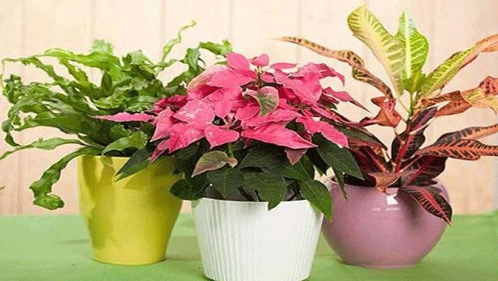 Комнатные растения в доме — подбор по приметам