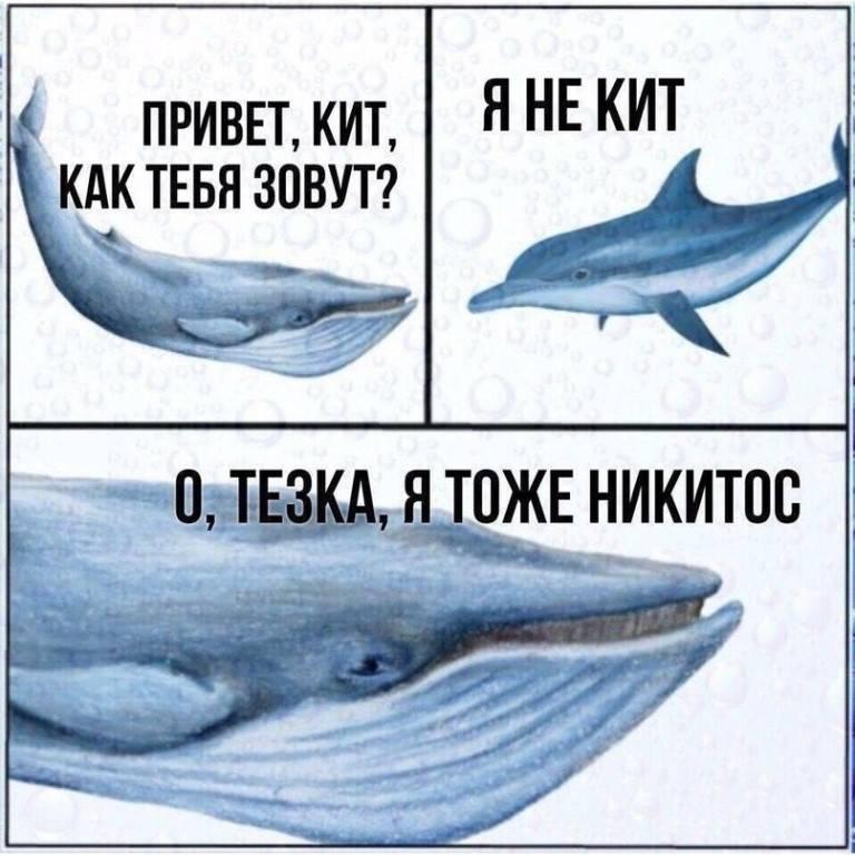 Сонник кит. к чему снится, что означает сон, в котором приснилось кит