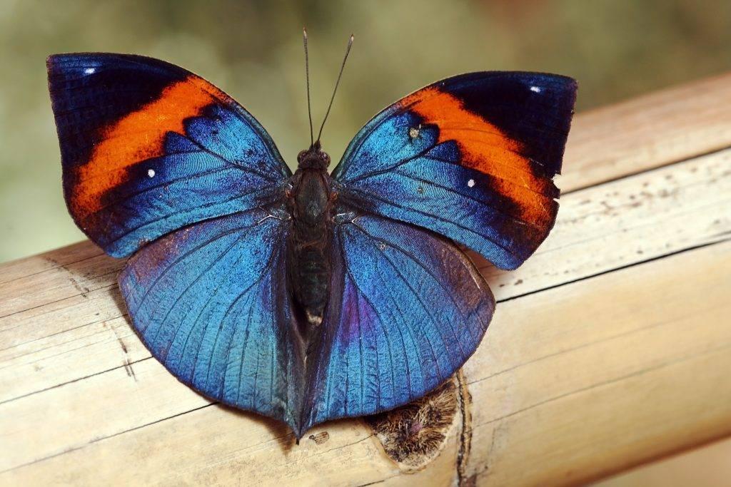 Бабочка залетела в дом или квартиру – приметы и суеверия