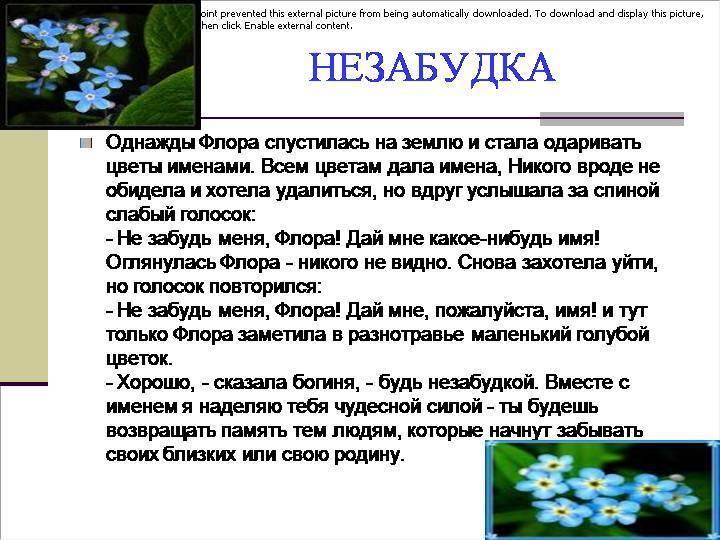 Легенды и поверья о весенних цветах разных стран | 321news.ru - все новости на раз два три