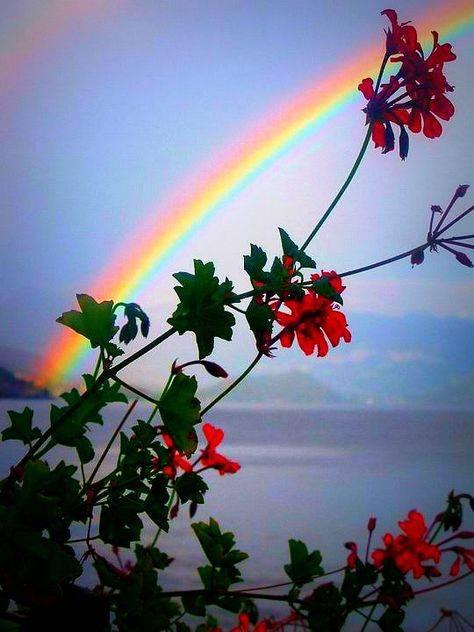 Увидеть радугу зимой — к чему эта примета?