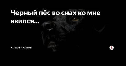 К чему снится черная кошка женщине или мужчине - толкование сна по сонникам