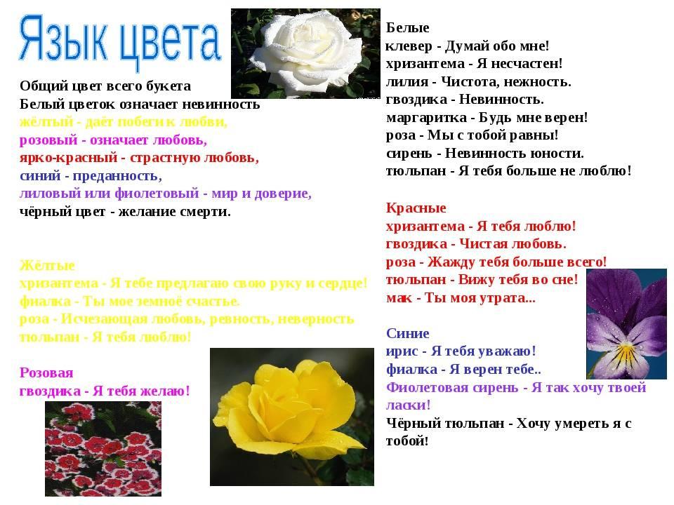 Кто сказал, что красные розы символизируют страсть?