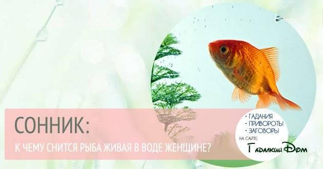 К чему снится ловить руками рыбу: значение и толкование сновидения - tolksnov.ru