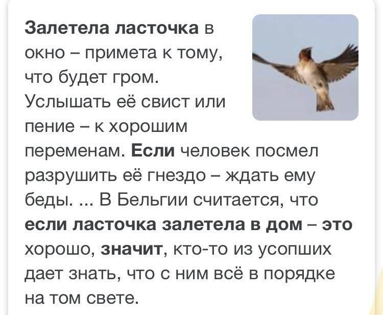 Примета птица залетела в дом. как снять негатив?