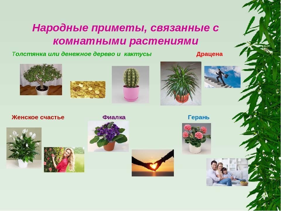 Топ-25 цветов и растений которые нельзя держать дома