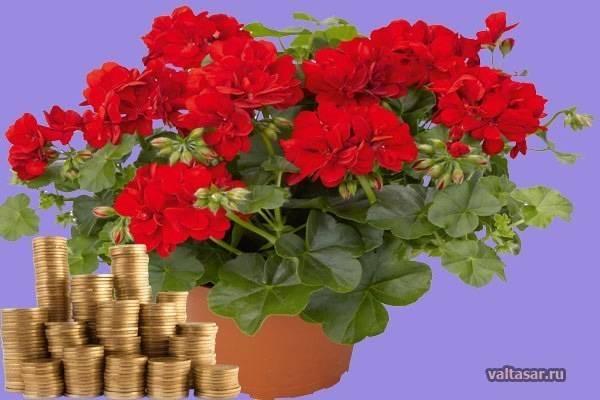 Какие цветы надо посадить в саду, чтобы привлечь любовь, счастье и успех на supersadovnik.ru