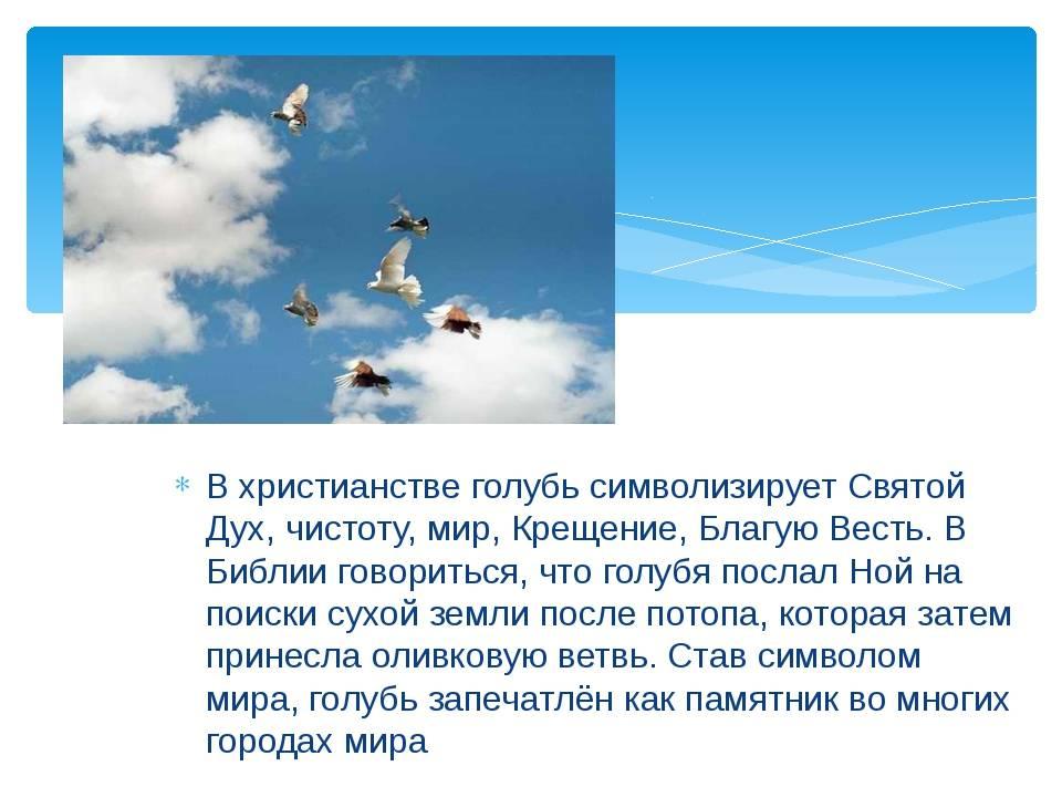 Кто приручил голубей и в каких целях использовали этих птиц мира