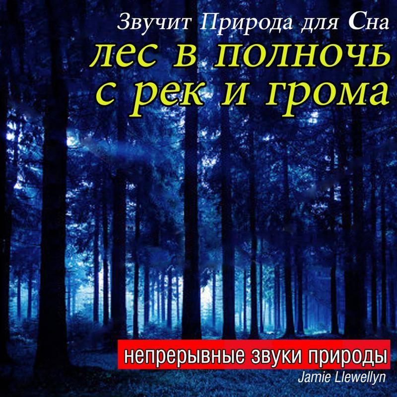Как толковать сон о лесе — 50 значений