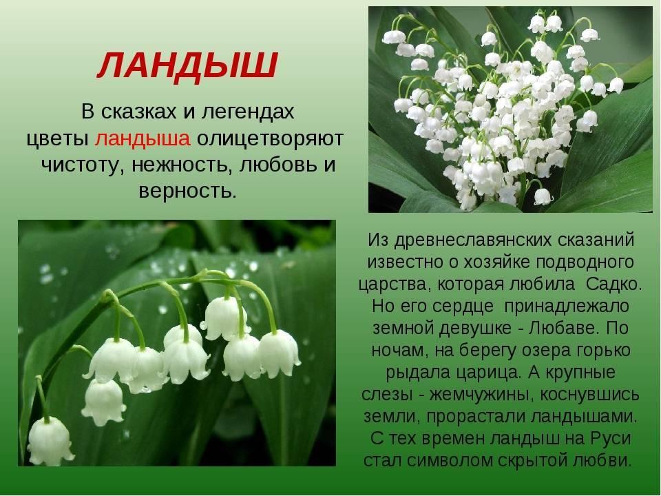 Старинные поверья о цветах — символах весны. легенды и поверья о весенних цветах разных стран