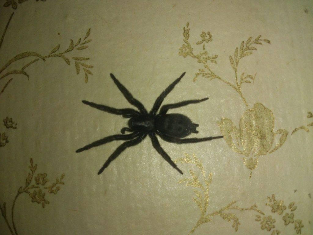 К чему увидеть паука в доме, квартире ванной, на кухне, утром, вечером, днем, ночью, белого, красного, черного, желтого, зеленого, крестовика, мертвого, много пауков, убить паука намеренно или нечаянно: приметы