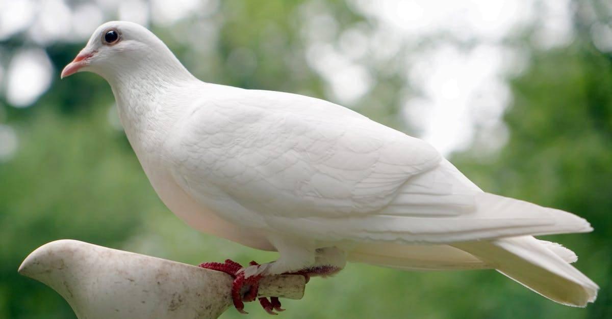Сонник белый голубь в квартире. к чему снится белый голубь в квартире видеть во сне - сонник дома солнца