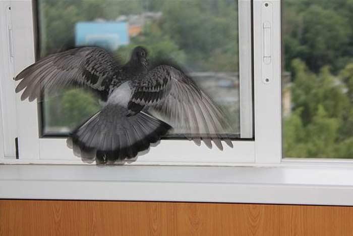 Примета «ласточка залетела на балкон или в дом»