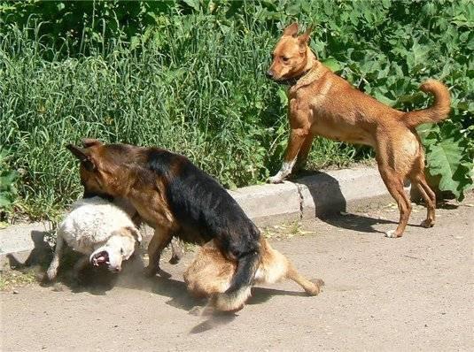 Сонник стаи собак нападают. к чему снится стаи собак нападают видеть во сне - сонник дома солнца