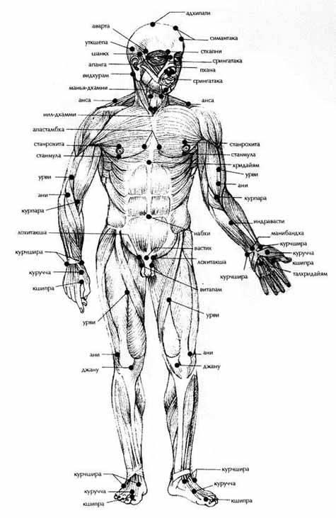 Где расположены болевые точки на теле человека. тема 5 анатомия болевых (уязвимых) точек человека   интересные факты