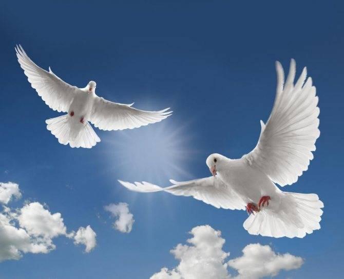 К чему снятся голуби: дома, на улице, в небе