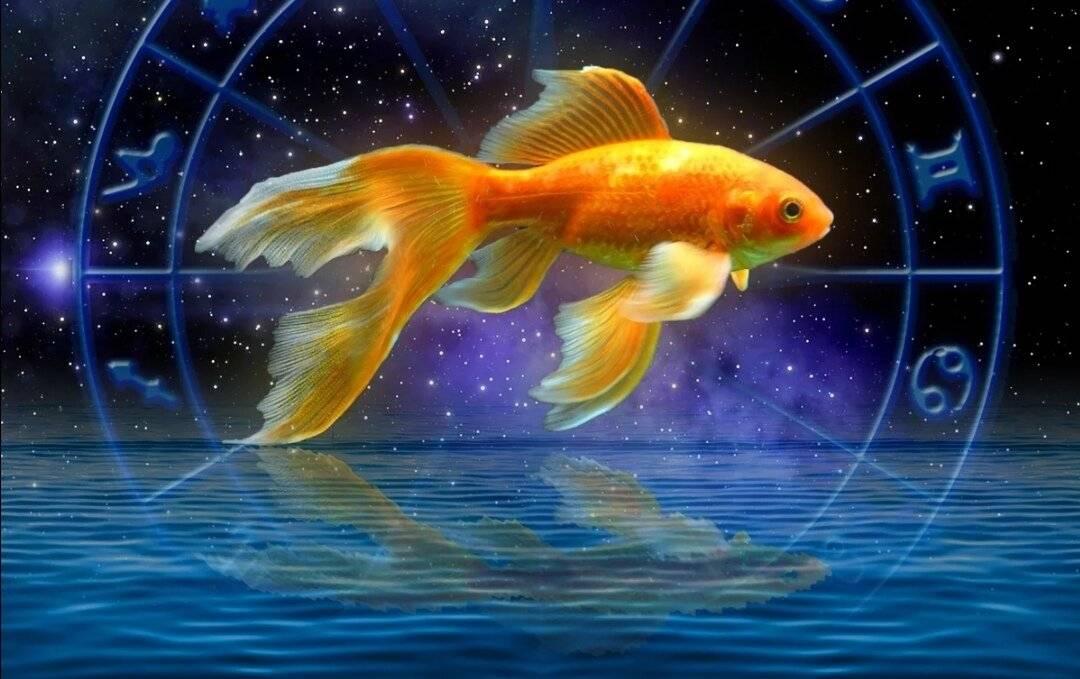 Мужчины и женщины рыбы
