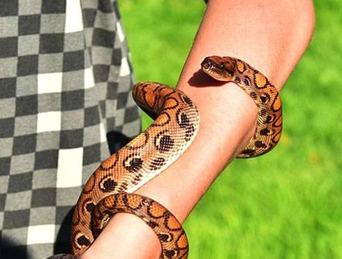 К чему снится укус змеи, если змея укусила во сне вас или кого-то другого? основные толкования, к чему снится укус змеи - автор екатерина данилова - журнал женское мнение