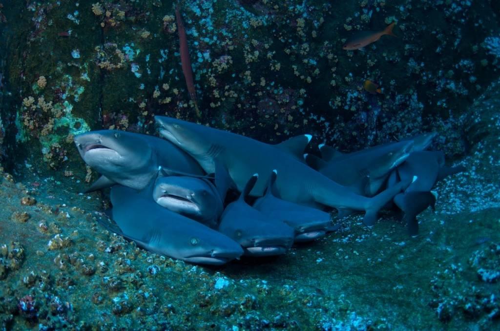К чему снится живая акула женщине или мужчине - толкование сна по сонникам