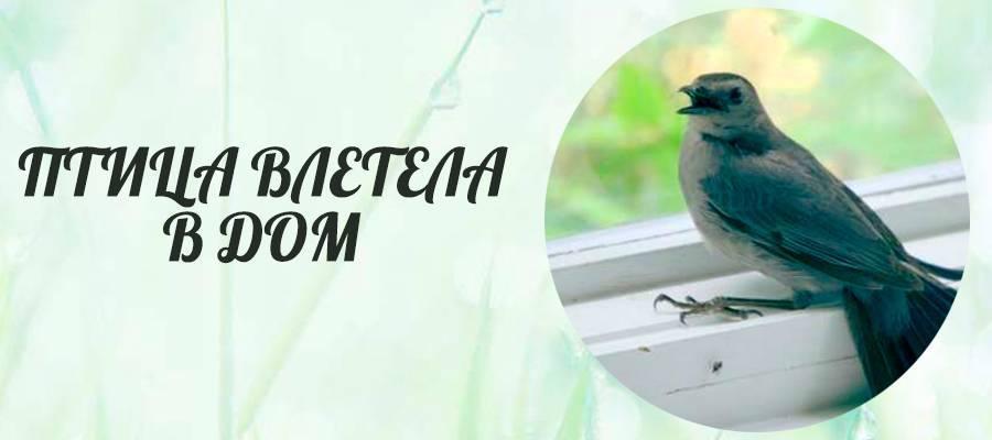 Птица залетела в дом: толкование приметы