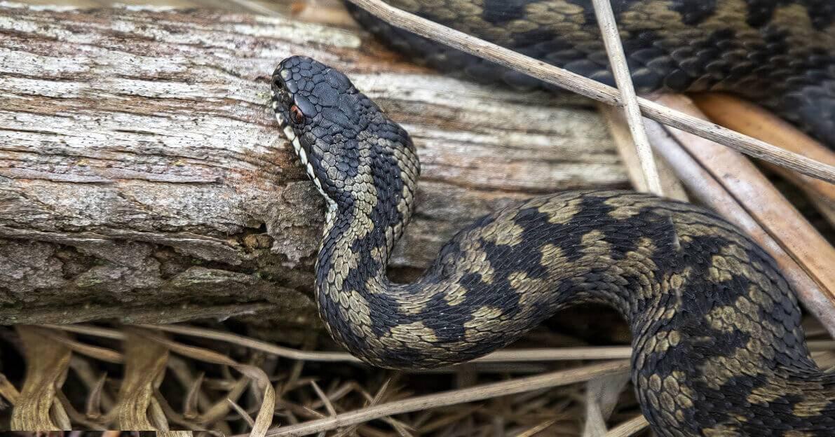 Увернуться от укуса змеи