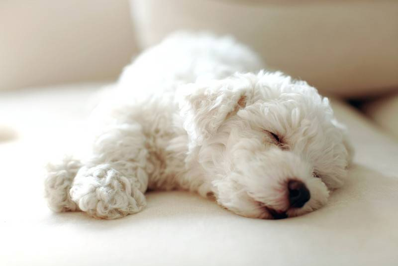 Укусила белая собака
