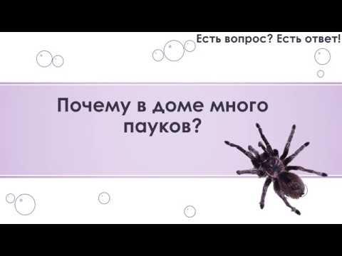 Почему по приметам нельзя убивать пауков в доме, что будет если задавить в квартире