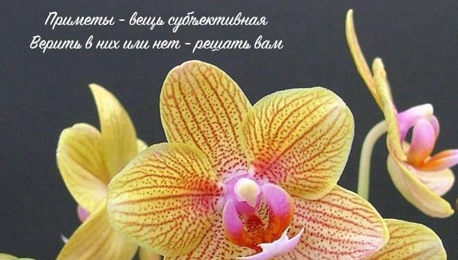 Можно ли орхидеи держать в спальне, где они должны стоять в квартире, каково их влияние на здоровье человека и почему их нельзя держать у кровати: фото-примеры дизайна с фотообоями без живых растений