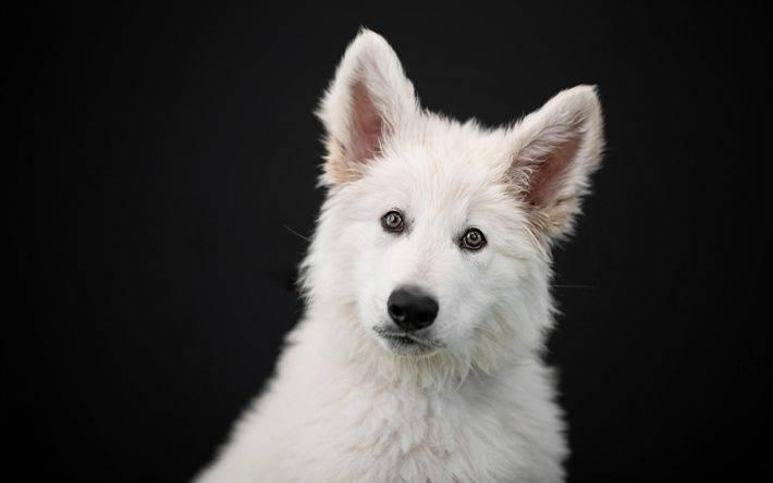 Мертвая белая собака