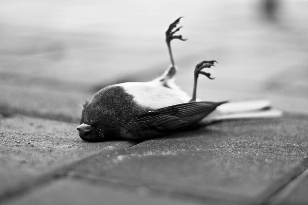 Сонник птица умерла