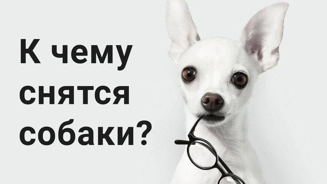 Сонник собака белого цвета. к чему снится собака белого цвета видеть во сне - сонник дома солнца