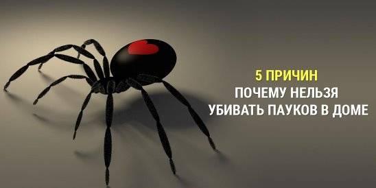 Почему нельзя убивать пауков?