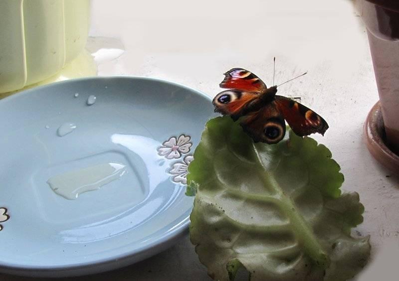 Все приметы о бабочках: к чему залетает в квартиру, дом, садится на руку, лицо