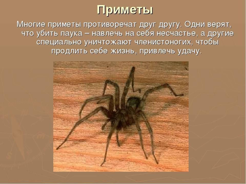Почему в квартире появляются пауки: опасны ли домашние пауки для человека