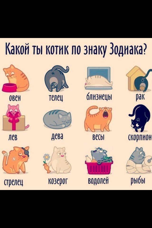 Счастливые цвета, которые вам нужно носить по знаку зодиака :: инфониак
