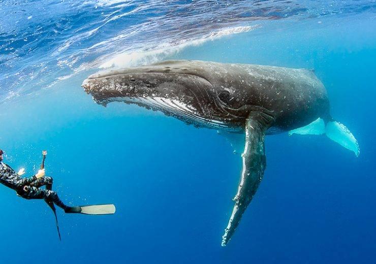 Видеть во сне кита: что значит по сонникам?