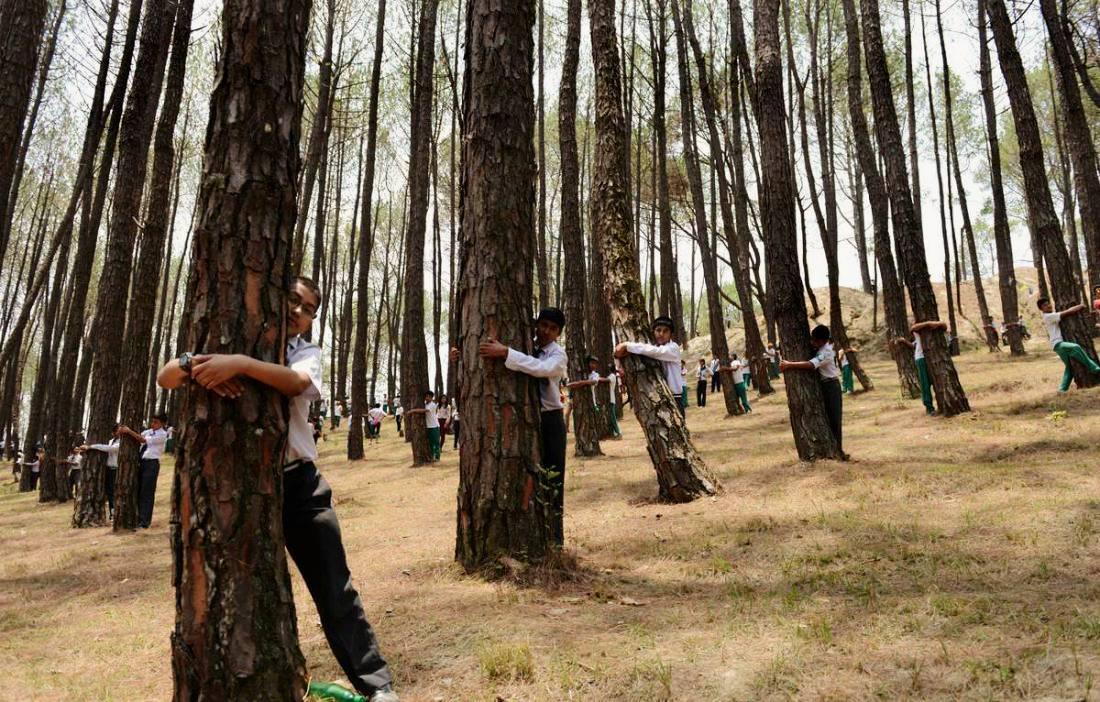 Энергия деревьев: как зарядиться энергией от деревьев
