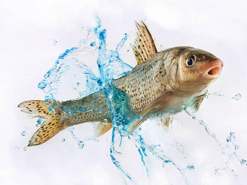 Если снится замороженная рыба женщине