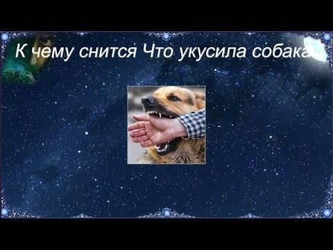 Во сне укусила собака: сонник и толкование
