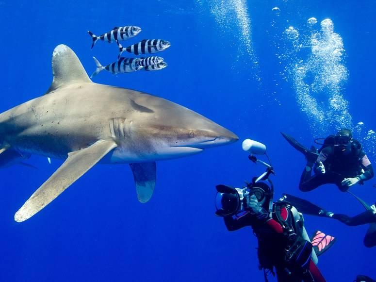 Сон акула. к чему сниться акула в воде напала или поймать акулу