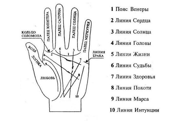 Что означают линии на ладони руки? наука и хиромантия