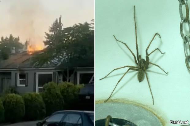 Почему нельзя убивать пауков в доме: приметы и суеверия, что говорят религии, народные поверья