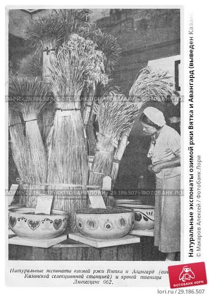 Сноп пшеницы — онлайн гадание на себя на ближайшую неделю